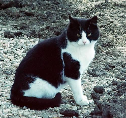 Bek the cat.