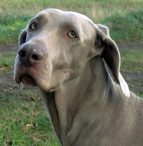 Millie, Muriel's dog.
